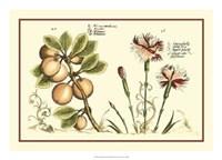 "Garden Botanica II by Vision Studio - 24"" x 17"""