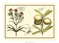 "Garden Botanica IV by Vision Studio - 24"" x 17"""