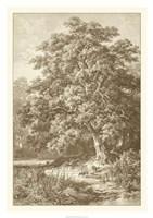 Sepia Oak Tree Giclee