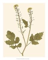 "Pressed Botanical I by Vision Studio - 16"" x 20"""