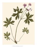 Pressed Botanical III Giclee