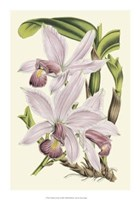 """14"""" x 20"""" Orchid Pictures"""
