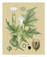 "Ivory Blooms II by Vision Studio - 20"" x 24"""