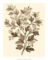 Sepia Munting Foliage I Giclee