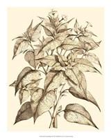 "Sepia Munting Foliage III by Abraham Munting - 16"" x 20"""