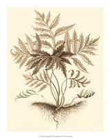 Sepia Munting Foliage IV Giclee
