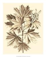 Sepia Munting Foliage V Giclee