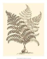 Sepia Munting Foliage VI Giclee