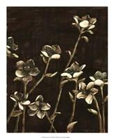 Blossom Nocturne II Framed Print