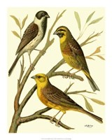 Domestic Bird Family I Giclee