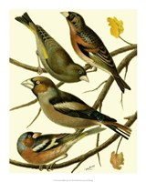 Domestic Bird Family II Giclee