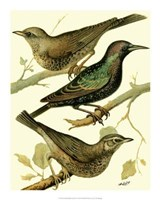 Domestic Bird Family IV Giclee