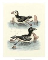 Aquatic Birds II Giclee