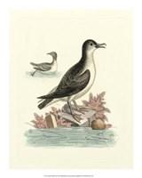 Aquatic Birds III Giclee