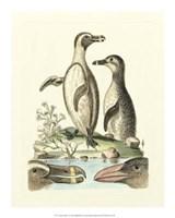 Aquatic Birds IV Giclee