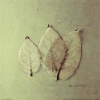 Trio of Skelton Leaves Fine Art Print