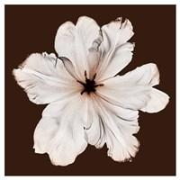 Ruffled Tulip Fine Art Print