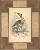 Marshland Bittern Framed Print