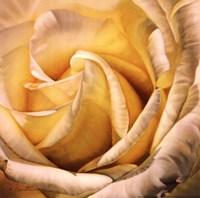 "Small-Sunburst by Harold Feinstein - 10"" x 10"""
