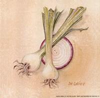 Onions Fine Art Print
