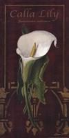 "Calla Lily by Gerard Paul Deshayes - 10"" x 20"""