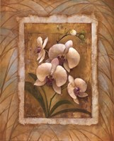 "Illuminated Orchid II by Elaine Vollherbst-Lane - 16"" x 20"""
