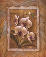"Illuminated Orchid II by Elaine Vollherbst-Lane - 22"" x 28"""