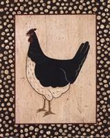 White Bellied Chicken Fine Art Print