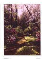 Spring Woods Fine Art Print