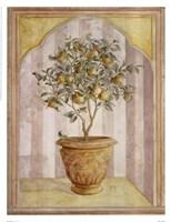 Pear Niche Fine Art Print