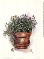 Potted Herbs-Oregano Fine Art Print