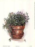 Potted Herbs-Oregano Fine Art Print