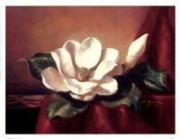 Magnolia Vignette l Fine Art Print