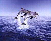 """Dolphin Trio by Peggy Abrams - 20"""" x 16"""", FulcrumGallery.com brand"""