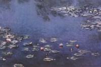 Waterlillies Fine Art Print