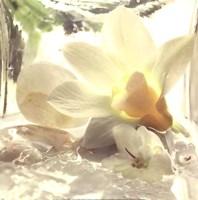 """Spa Garden III by Donna Geissler - 12"""" x 12"""""""
