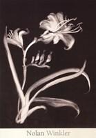 Midnight Lilies Fine Art Print