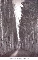 Poplars 2, Kashgar Fine Art Print