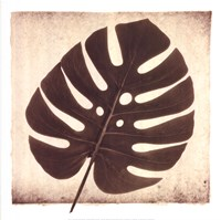 Monstera I Fine Art Print