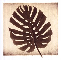 Monstera II Fine Art Print