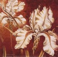 "White Iris by Richard Henson - 6"" x 6"""