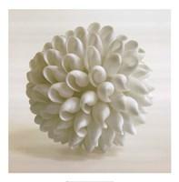 Shell III Fine Art Print