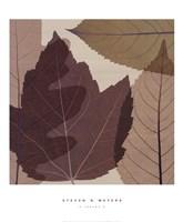 4 Leaves 2 Fine Art Print