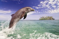 "36"" x 24"" Dolphin Photography"