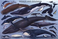 Whales And Dolphins Fine Art Print