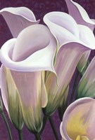 Purple Lillies Fine Art Print