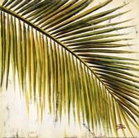 "Baru Palm III by Patricia Pinto - 12"" x 12"""