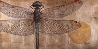 Dragonfly On Silver Fine Art Print