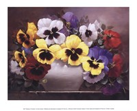 Rainbow of Pansies Fine Art Print
