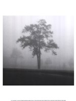 "Fog Tree Study I by Jamie Cook - 12"" x 16"""